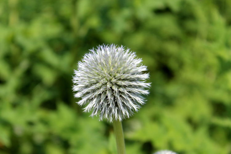 Beauty In Nature Close-up Day Flower Flower Head Freshness Green Color Growth Nature Plant