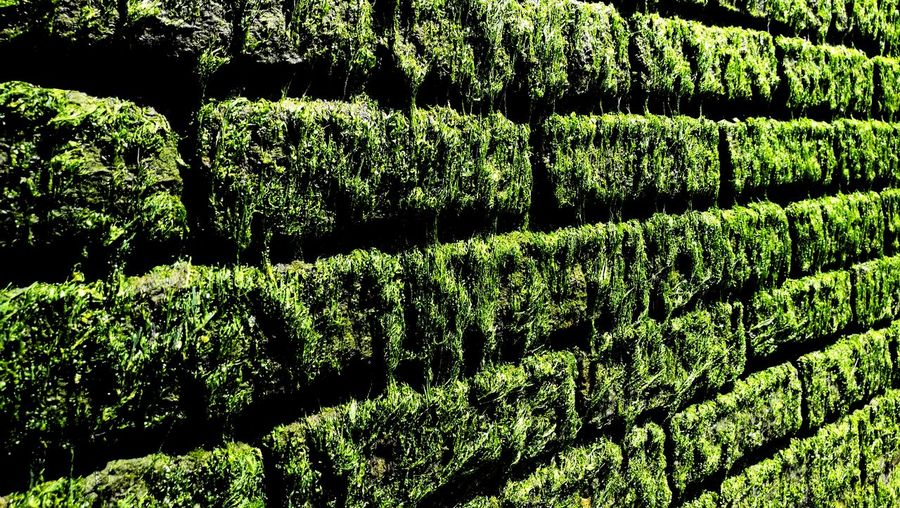 Full Frame Backgrounds Pattern No People Day Outdoors Nature Close-up Algae Green Wall Green Brick Wall Wet Thames Bank