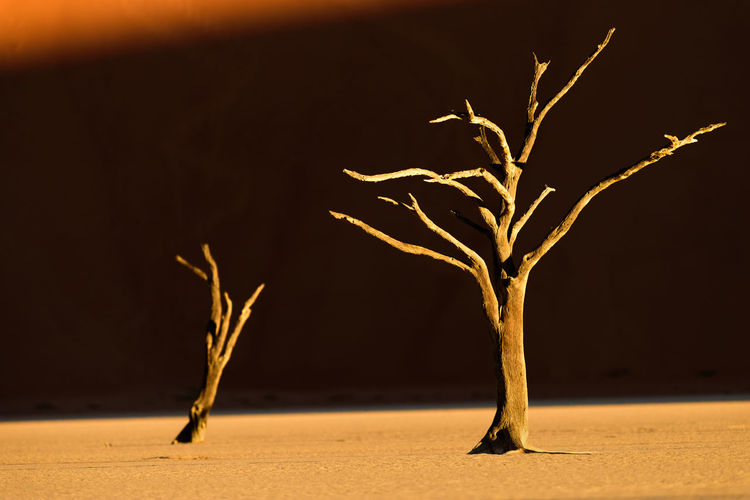 Arid Landscape Beauty In Nature Dead Vlei Desert Desert Landscape Dry EyeEm Landscape EyeEm Nature Collection Landscape_photography Namib Dunes Namibia No People Sand Sky And Trees Sunset Tranquility Tree