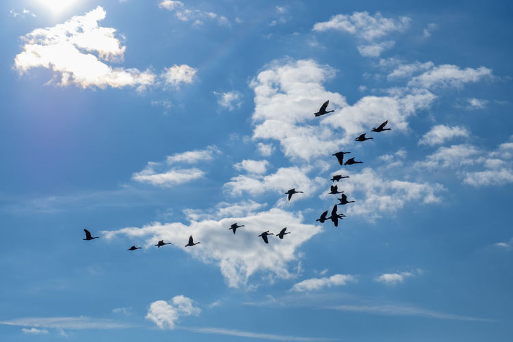 Beautiful view with geese flying in the sky