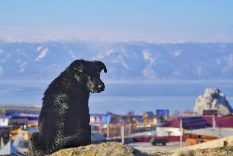 Dog sitting on rock