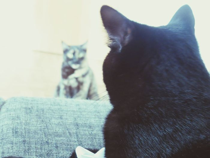 Kater Katze Relaxing Hello World