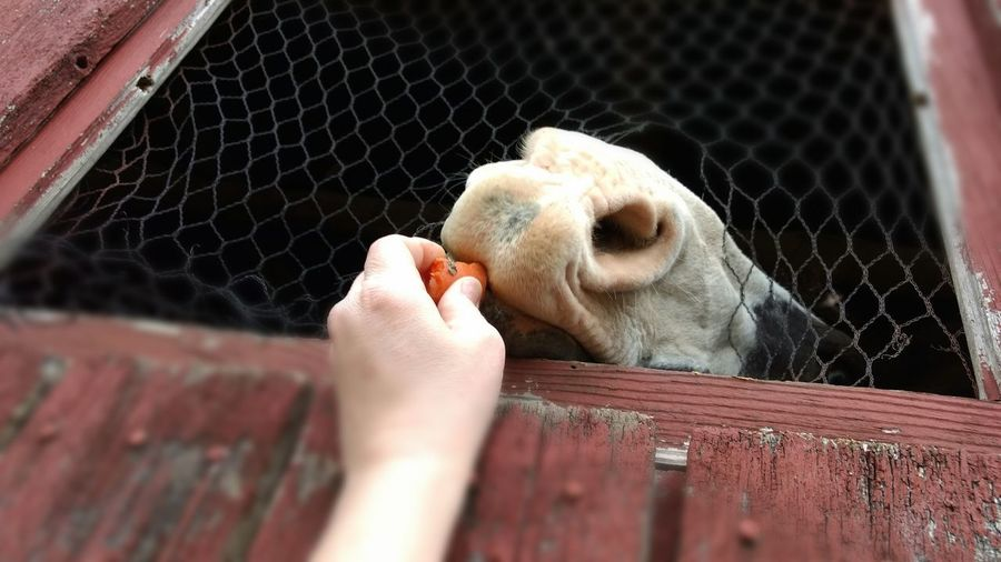 Close-up of hand feeding cat in cage