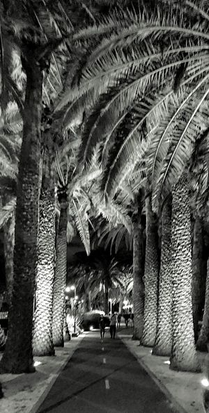 Path through the trees Tree Trunk Trees Bark Texture Black And White XperiaZ5 Lenka Perth Australia Finding New Frontiers