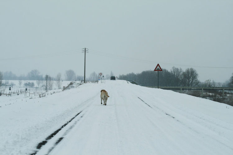 Snow covered road amidst field against sky