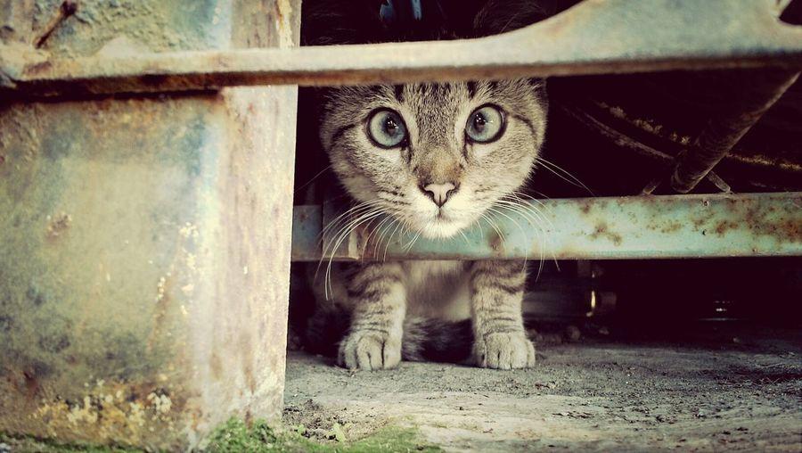 gato enjaulado Tula De Allende Cats Taking Photos Mexico