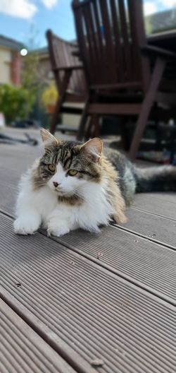Portrait of cat resting on seat