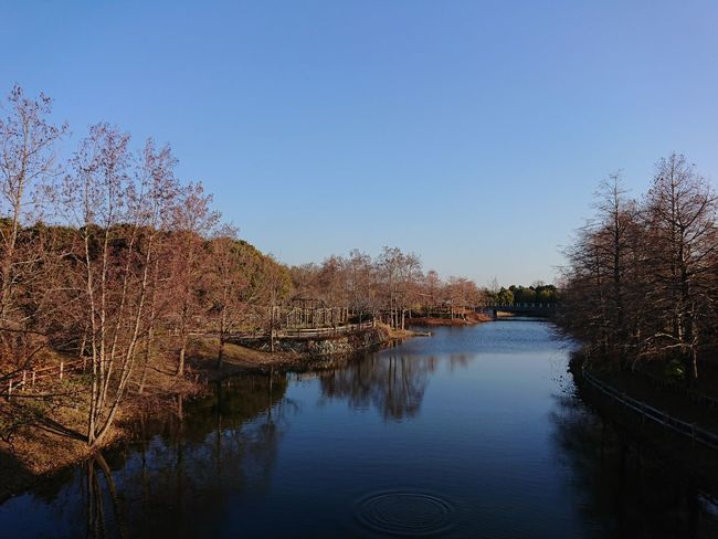 定点観測 Water Reflection No People Outdoors Tree Clear Sky Sky