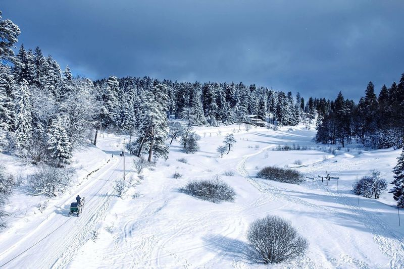 Snow Winter Cold Temperature White Color Nature Tree Tourism Ski Track Tranquility Pine Woodland Skiing Landscape Frozen Scenics Outdoors Tranquil Scene Sky Beauty In Nature Cloud - Sky