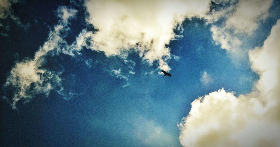 小田原市江之浦 Birds In Flight Bird