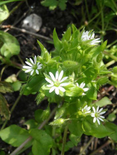 Pretty♡ Springtime Nature Nature Photography Love To Take Photos ❤ Summer ☀ Spring Flowers Forestwalk Vladimir Hannah CSI Marie Hasenglück Blossom