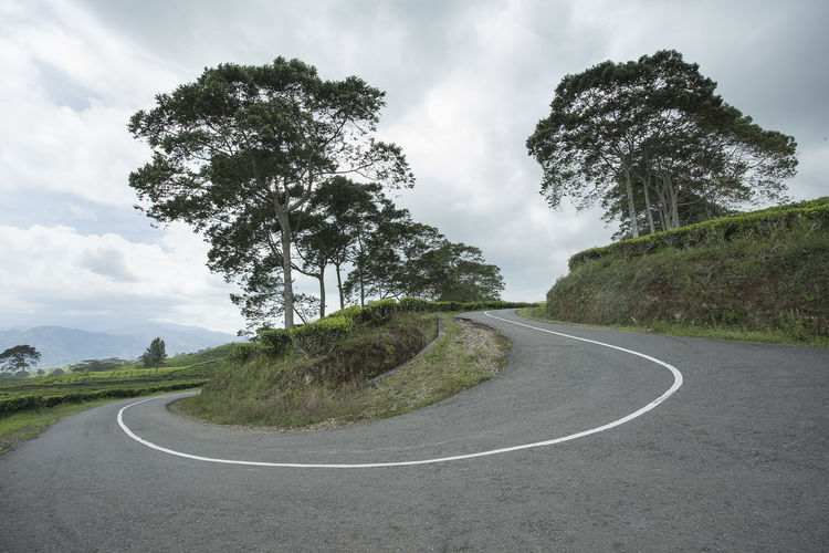 climbing and winding road in tea garden Road Plant Transportation The Way Forward Direction Nature No People Beauty In Nature Outdoors Tree Sky Cloud - Sky Day Curve Sign Tranquility Symbol Road Marking Marking Scenics - Nature Dividing Line Long