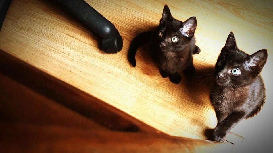 Babycat Cute Pets Blackcats Cute Sunny Taking Photos Cat Brothers Blackcatlove Green Eyes