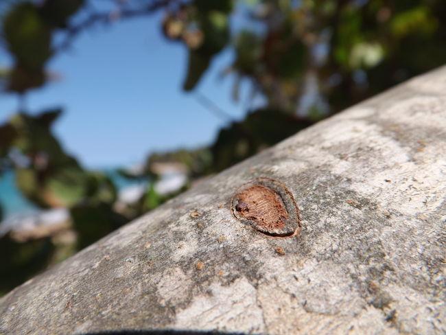 Tree Trees Branch Sky Beach Green Blue Nature Naturaleza Playa Verde Azul Cielo Leaves Ojas Arboles Arbol. Rama Maximum Closeness