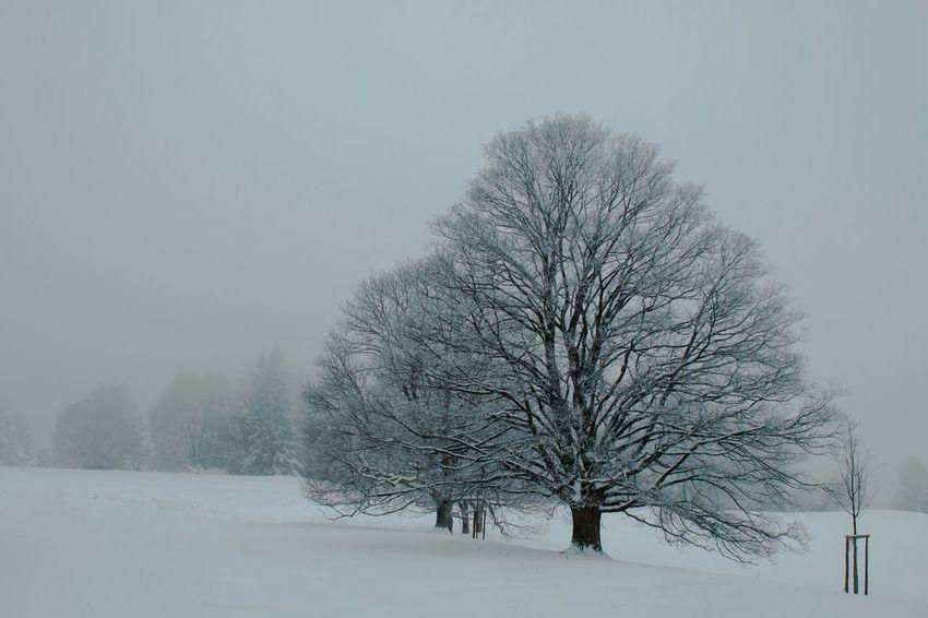 Winter Snow Schnee Schwäbischealb Swabian Alb Frozen
