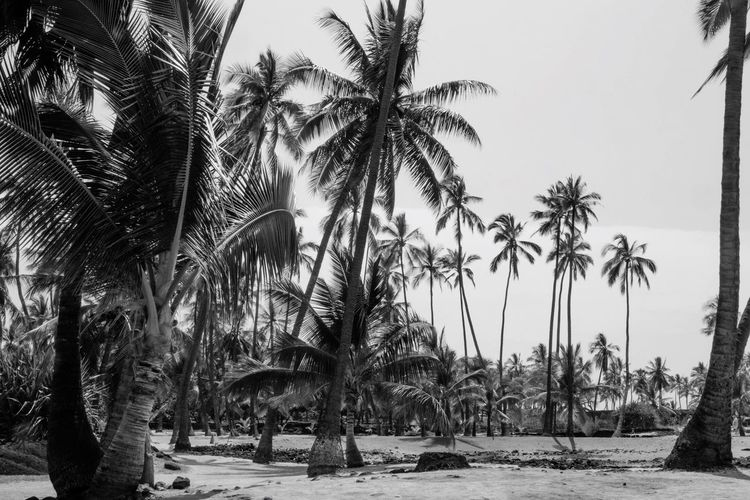 Palm tree Palm Tree Beach Outdoors Black And White Beauty In Nature Sea Scenics No People Nature EyeEm Nature Lover Clear Sky EyeEm Best Shots Travel Destinations Vacation Sand Ocean Hawaii