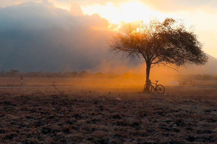 Bicycle by tree on field against sky during sunset