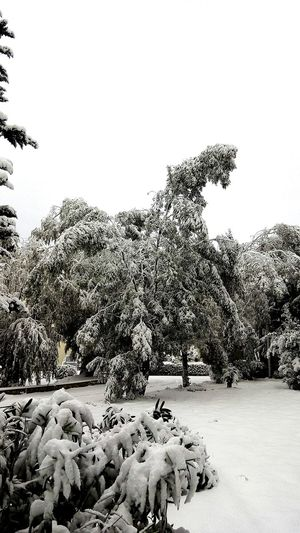 Neve Bianco Natura Bari Puglia Inverno