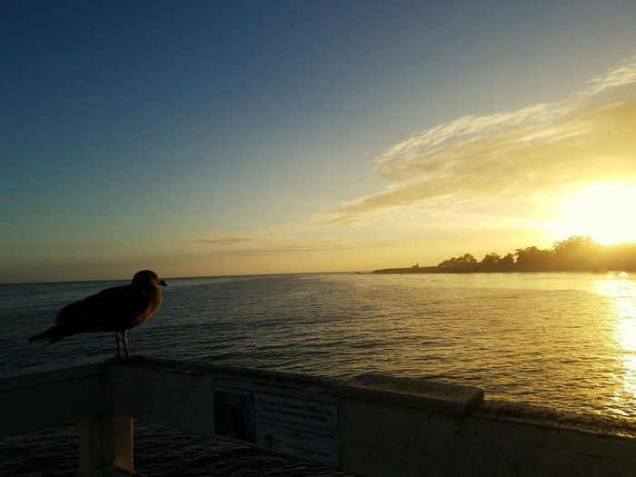 My Year My View Sunset Sea Beauty In Nature No People Travel Destinations Water Animal Wildlife Nature Outdoors Santa Cruz California light and reflection Scenics Dramatic Sky Seagull Finding New Frontiers Miles Away