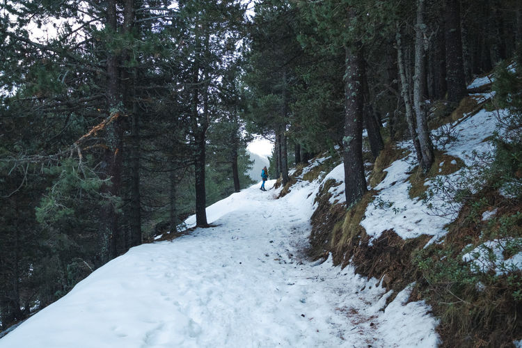 Footpath amidst snow covered trees in forest