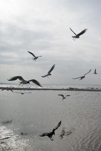 Beach Bird Sea Seagull Sky Spring Travel Water