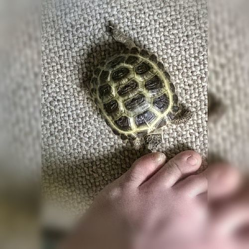 good morning Human Body Part Indoors  Tortoise Turtle 🐢 For My Friends That Connect Animals Turtle Love Animal Themes Mondaymorning Monday Morning