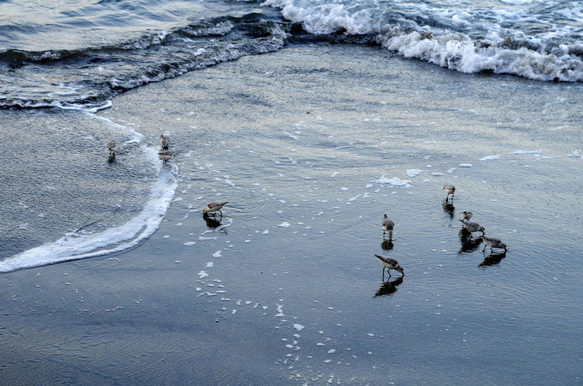 Birds Water Calm Waterfront Mid Distance Shore EyeEmNewHere