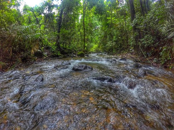 The silence of the nature Nature Water Outdoors Day No People Growth Forest Beauty In Nature Tree EyeEm Nature Lover OpenEdit Open Edit EyeEm Gallery EyeEm Best Shots Wideangle Gopro Forest Photography River View Green Lost In The Landscape