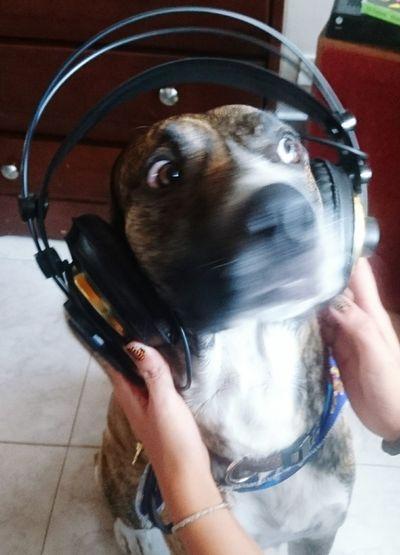 Doogs Rocker Animals Pet Music Liferocks Crazydog