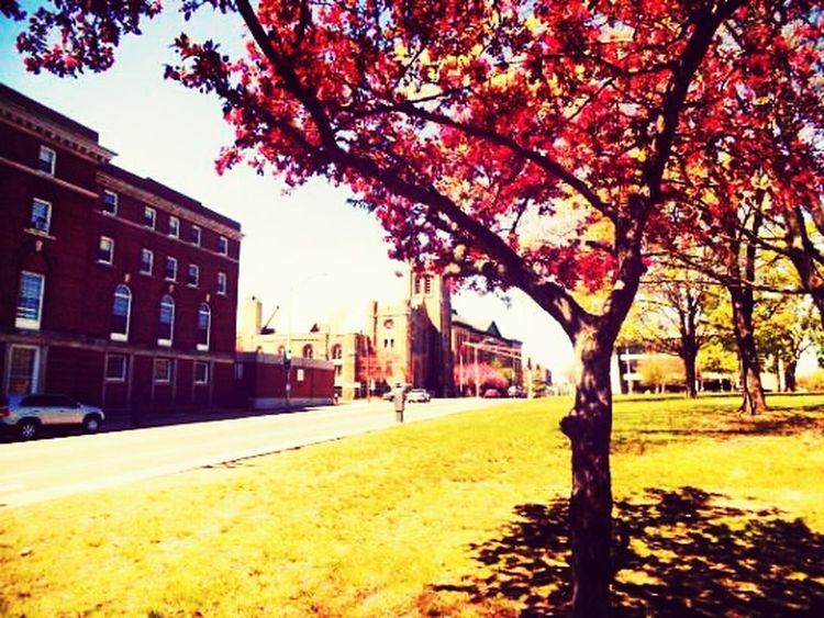 Outside Beauty Tree