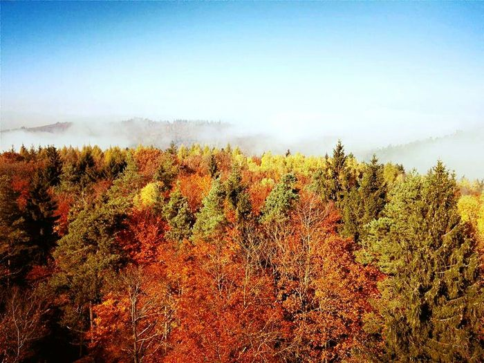 Nature Beauty In Nature Growth Tree Sky Outdoors Day Clear Sky Scenics No People Landscape Freshness Autumn Colors Autumn Autumn🍁🍁🍁 Automne🍁🍂🍃 Alsace Alsacia Alsacefrance