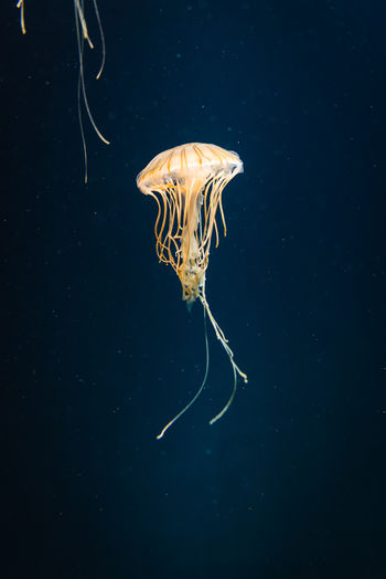 Close-up of jellyfish