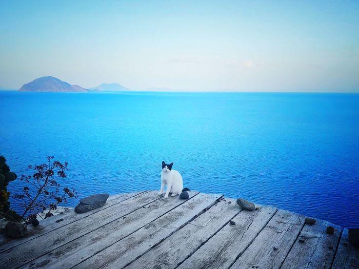 Eolian Island Vulcan Cat Eolian Islands Water Pets Domestic Animal Themes Animal Domestic Animals Sea Sky Beauty In Nature Horizon Over Water