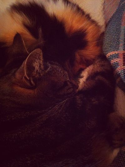 Calico @ Tabby Cuddled On Cold Winter Day