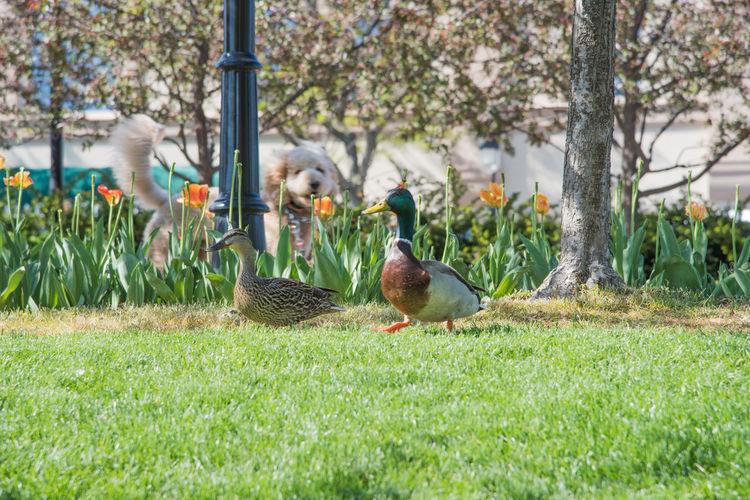 Birds perching on field