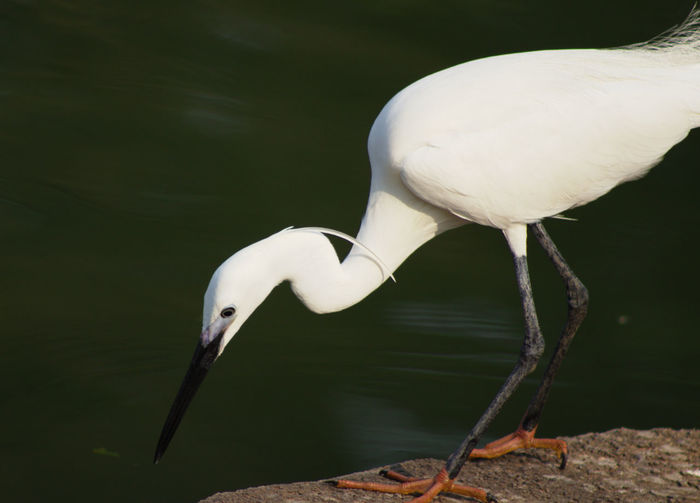 Close-up of white bird perching on lake