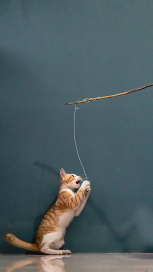 Cat playing rope