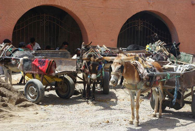 Service Animals In Morroco