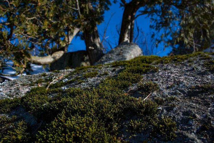 Plant Tree Moss