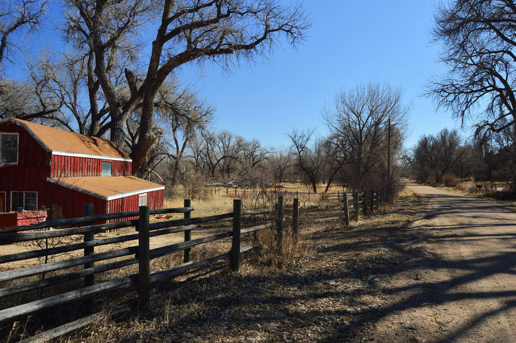Quiet country road Red Barn Dirt Road Tree Shadow Sky Architecture Built Structure Fence
