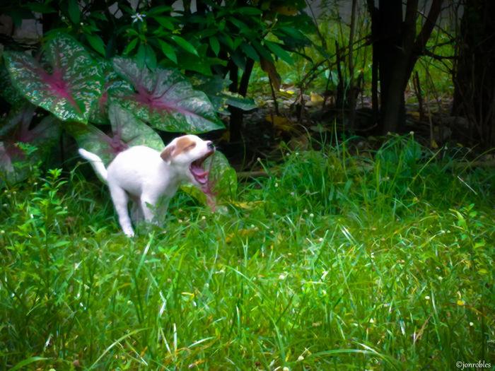 Dog Yawn