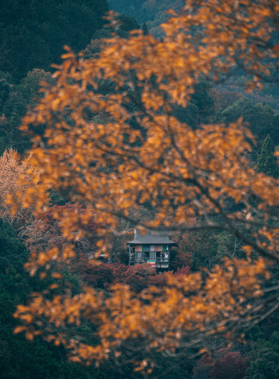 // autumn in kyoto // EyeEm Best Shots EyeEm Nature Lover Nature Autumn Autumn colors Autumn Leaves autumn mood Shootermag Shootermagazine AMPt_community Yellow Thedarksquare Tree Plant Architecture Built Structure Building Exterior Building House No People Change Day Outdoors Land Forest Residential District Growth Beauty In Nature Focus On Foreground Window
