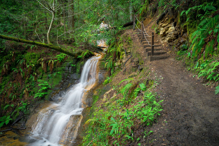 Trail Steps and