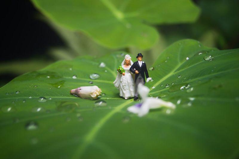 Wedding cake figurine on wet leaf