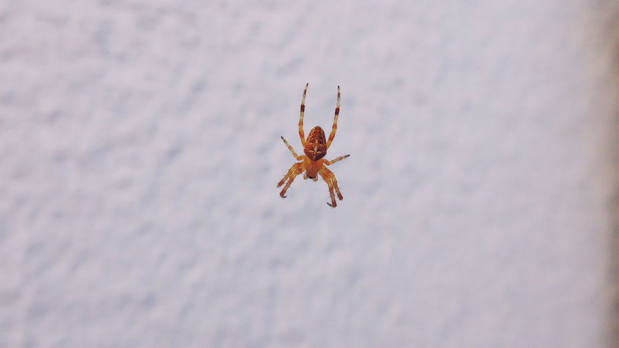 Animal Wildlife One Animal Animals In The Wild No People Animal Themes Day Close-up Outdoors Nature Spider Garden Balcony City Creatures City Animals