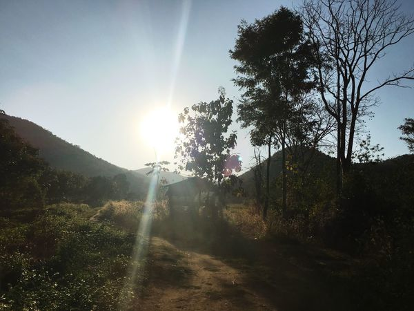 Sunbeam Lens Flare Tree Sunlight Sun Nature Sky Outdoors Beauty In Nature Growth Scenics Day No People Mountain