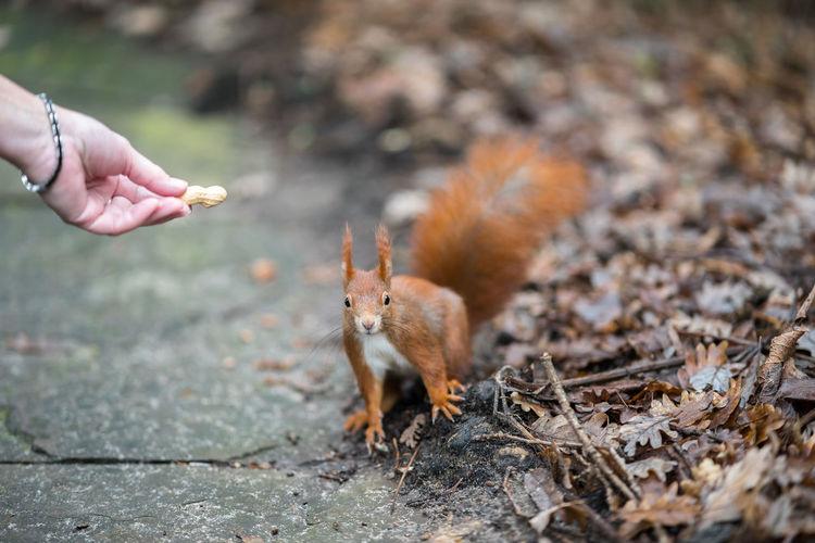 Man feeding squirrel on land