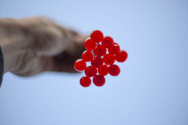 Close-up of hand holding red berries against sky