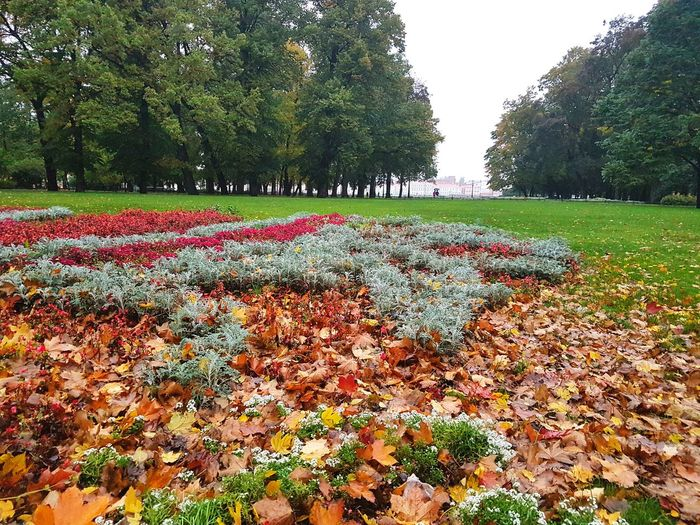 St Isaac's Square, St Petersburg, Autumn СанктПетербург Russia Russian Saintpetersburg Stpetersburg Garden Square Flowers Architecture Flowers,Plants & Garden Trees Green Nature Square St Isaac's Square Tree Flower Leaf Water Sky Grass Plant Green Color Fall Leaves Autumn