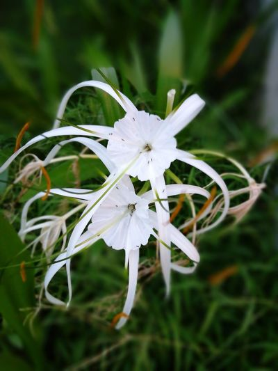 Flower Close-up Fragility Flower Head Day No People Focus On Foreground Outdoors Nature Beauty In Nature Freshness